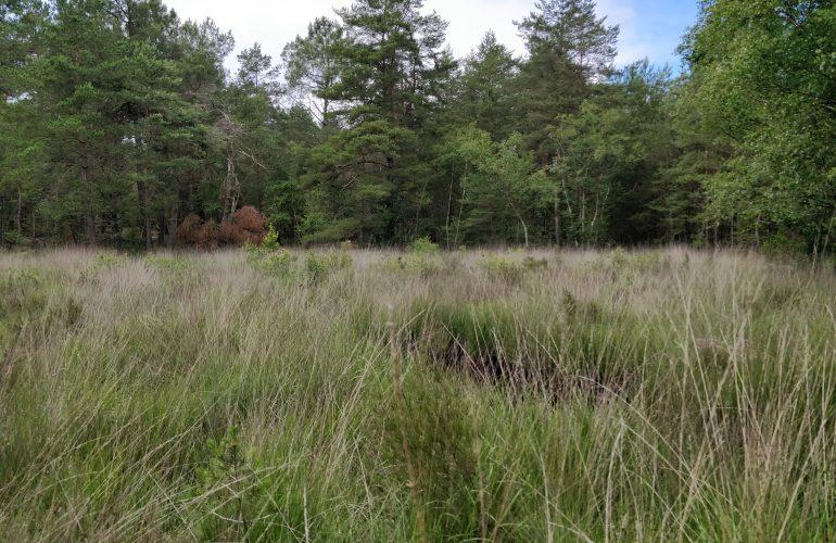 Prairie humide du camp d'Auvours