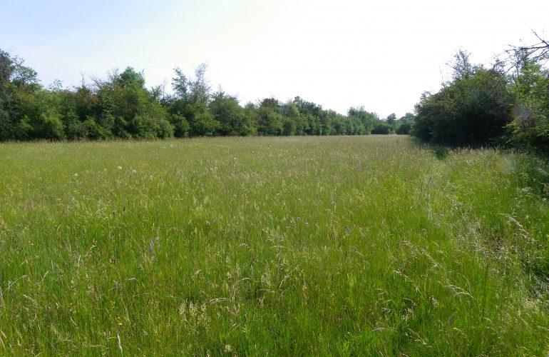 Prairie bocagère du camp d'Avon